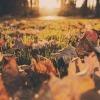 Podzim v Tatrách